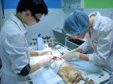 Клиника Евроветсервис, фото №1