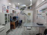 Клиника Ветеринарная клиника зоопарка, фото №2