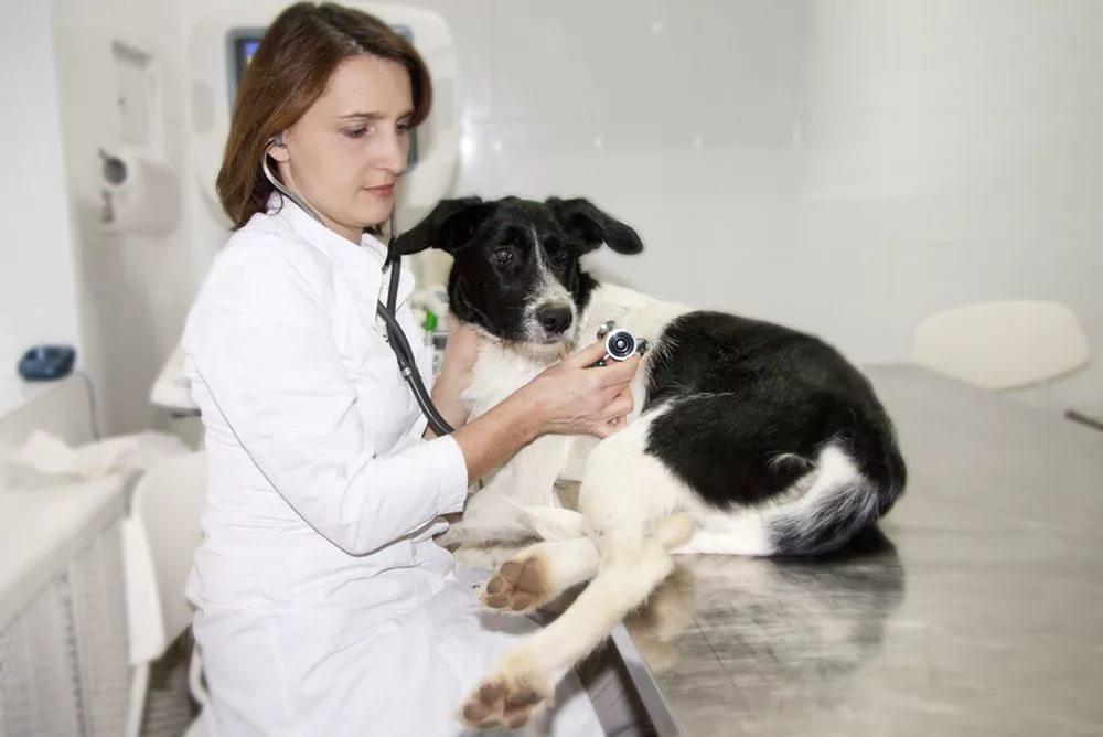 Ветеринарная диагностика
