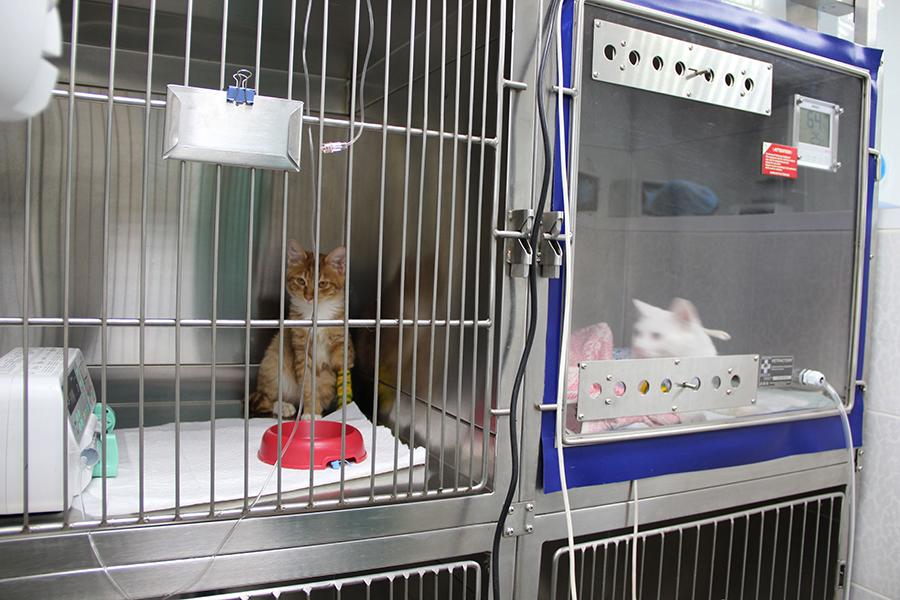 Ветеринарный стационар для животных
