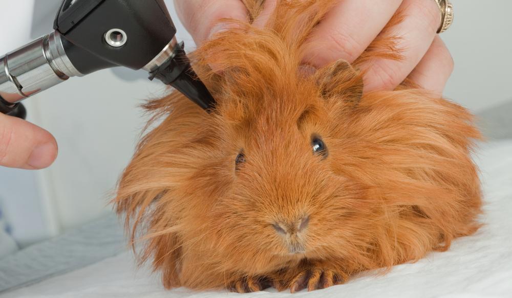 Лечение кроликов и грызунов