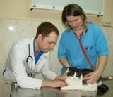 Клиника Любимчик, фото №3