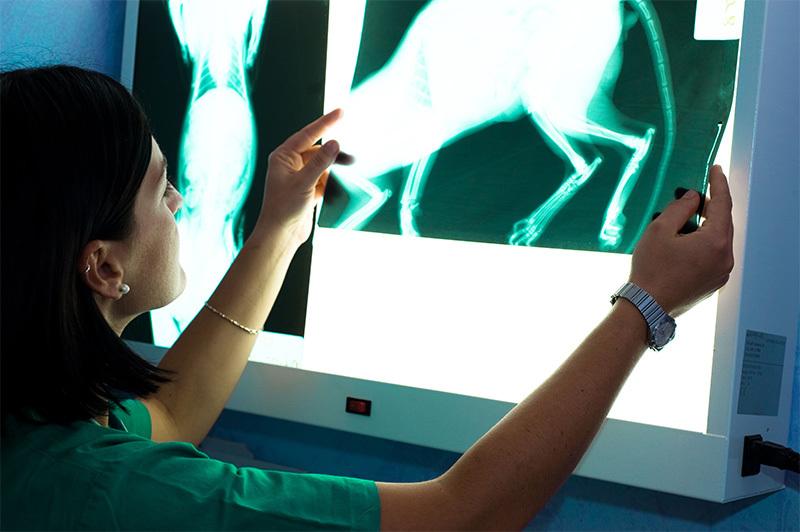 Где делают цифровой рентген домашним животным?