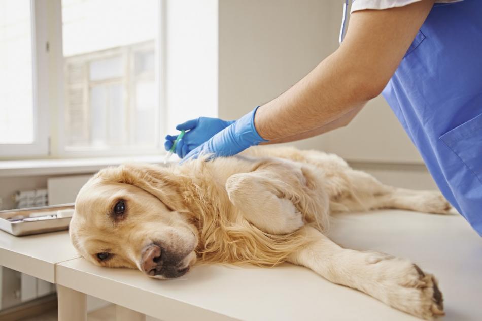 Сколько стоит усыпление домашних животных?